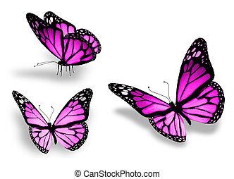 三, 被隔离, 背景, 紫色, 白色, 蝴蝶