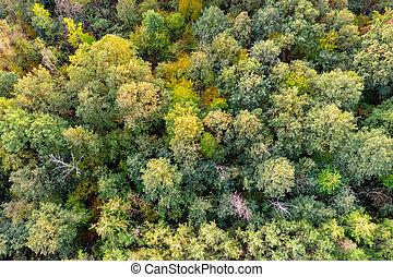 下來, 空中, 頂部, forest., 秋天, 看法