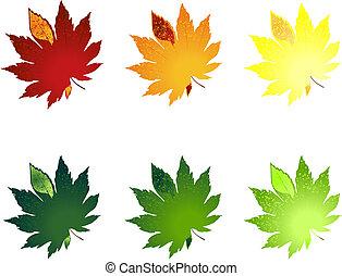 不同, 葉子, colour., 插圖, 矢量, 樹