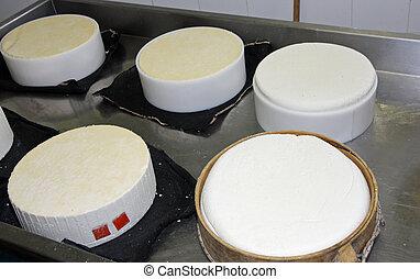 乳酪, caciotta, 工廠, 形式, 生產, 各種各樣, 新鮮