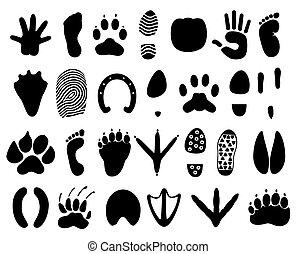 人, 矢量, 追蹤, 插圖, animals.