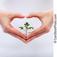 保護, 愛, 自然
