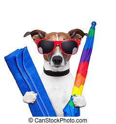 假期, 狗, 夏天
