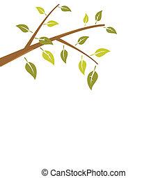 分支, 摘要, 樹, 被隔离, 背景, 白色