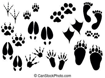 動物, 矢量, 形跡, -