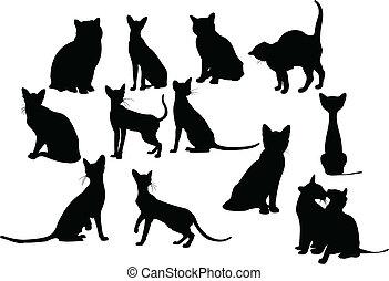 十二, 黑色半面畫像, 貓