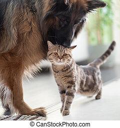 友誼, 一起, 貓, 狗, 在之間, pets., indoors.