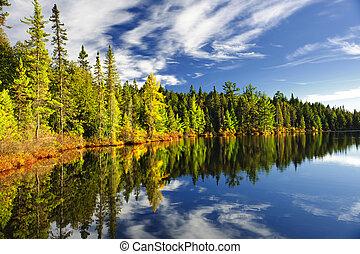 反射, 湖森林