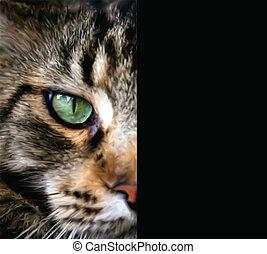 向上, 一半, 關閉, cat., 臉, 矢量, 緬因, 浣熊