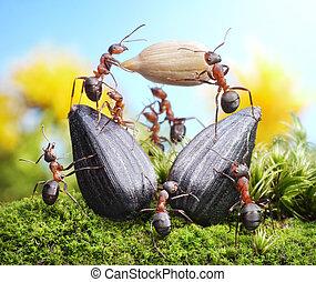 向日葵, 隊, 螞蟻, 配合, 庄稼, 農業, 收穫