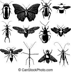 品種, 矢量, 黑色半面畫像, 昆虫
