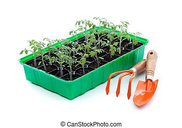 器具, 園藝, 秧苗