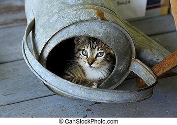 噴壺, 貓