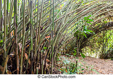 圖案, 竹子, 自然, 背景, 樹