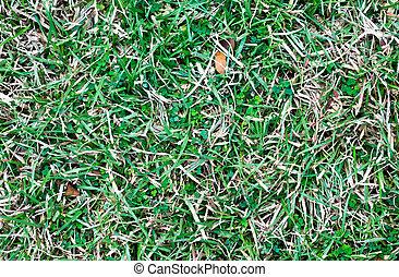 圖案, 草, 背景