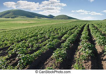 土豆, 務農, 領域