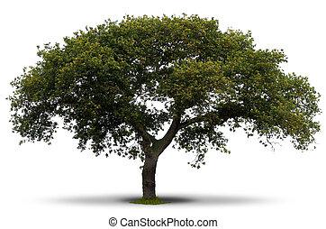 在上方, 樹, 綠色的背景, 陰影, 草, 根, 白色