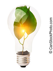 在燈泡里面, 生長, 植物