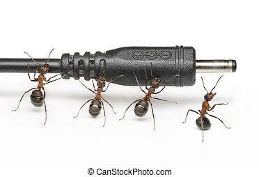 塞子, 流動, 螞蟻, 連接, 電話, 配合, 隊, 工作