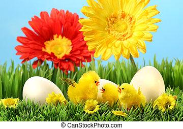 复活節小雞, 草