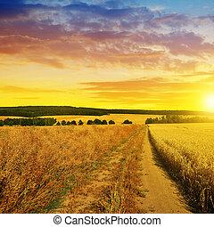 夏天, 泥土, 風景, 鄉村的道路, sunset.