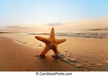 夏天, 海灘。, 陽光普照, starfish