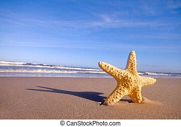 夏天, 海灘, starfish