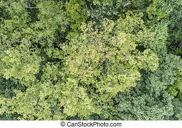 夏天, 看法, 空中, 綠色的森林