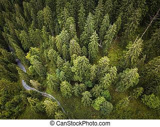 夏天, 空中, 頂部, 樹, 綠色的森林, 看法