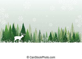 多雪, 森林, 背景, 冬天