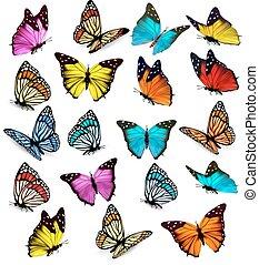大, 矢量, 彙整, 鮮艷, butterflies.
