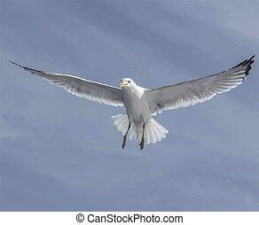 天空, 自然, 海鷗飛行