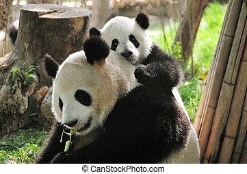 嬰孩, 大熊貓
