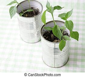 小, 植物, 罐頭能