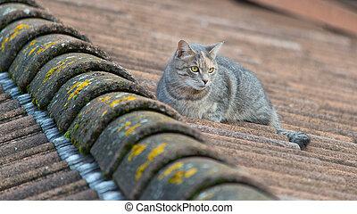 屋頂, 貓