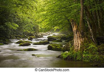 山, 偉大, 放松, 自然, 冒煙, 公園, gatlinburg, tn, 和平, 有霧, tremont, 河, 國家, 風景, scenics