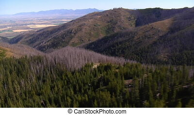 山, 空中, 死的樹, 射擊, 森林
