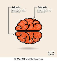 左, 創造性, 事務, 知識, 腦子, 圖象, 權利, 簽署, 符號, 教育