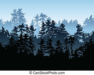 常綠植物, 森林