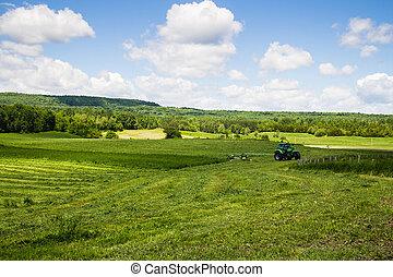 干草, 切, 拖拉机, 領域