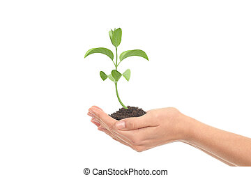 很少, 婦女, 手, 成長, 植物