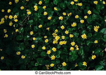 很少, 植物, 小, 綠色, 花, 黃色, 開花