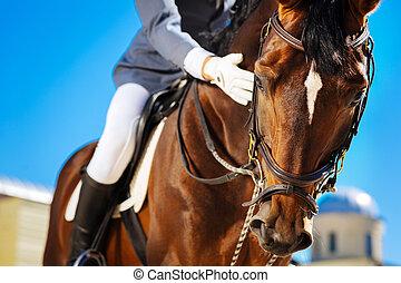很少, 騎馬, 擔心, 參與, horserace, 少量, 感到, 以前