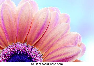 後面, 特寫鏡頭, 花, 陽光