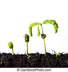 愛, 成長, -, 萌芽, 自然, 概念, 植物