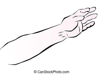 手臂, 人類