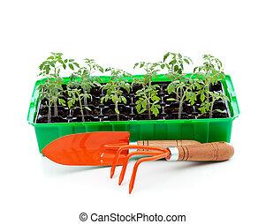 托盤, 萌芽, 園藝工具, 秧苗
