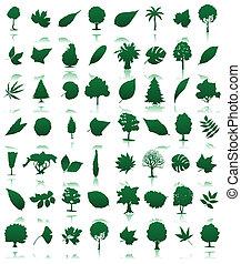 插圖, 圖象, leaves., 彙整, 矢量, 樹