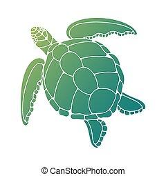 插圖, 海龜, 矢量