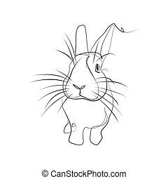 插圖, 矢量, 兔子, lineart